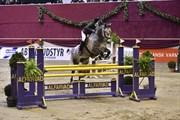 Horse for sale - FIERO (NWB)