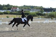 Horse for sale - GRANDEUR