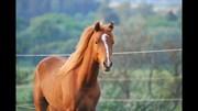 Horse for sale - MOONDANCER
