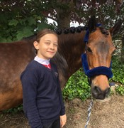 Horse for sale - Sisse