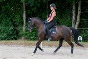 Horse for sale - BAKKEGÅRDENS GINNY