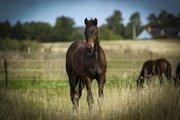 Horse for sale - GRANDALS D'AVIGNON