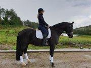 Horse for sale - KANSAS