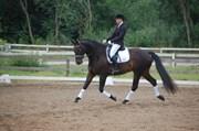 Hest til salg - O´PUCCINI