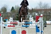 Hest til salg - HOPLA'S DIAMOND STAR