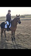 Horse for sale - Chanell