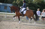 Horse for sale - QUICKSTEP