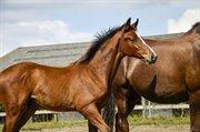 Horse for sale - DENVER
