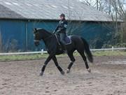 Hest til salg - RACEBOY