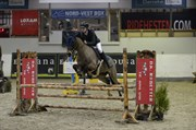 Horse for sale - MARRONDALES FLOYD