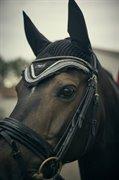 Horse for sale - NANSY SØBLINK