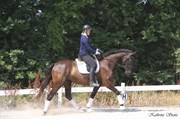 Horse for sale - FACIENNE