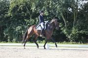Horse for sale - Hesselhoej.dk