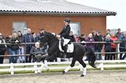 Horse for sale - FREDBO'S GARMIN
