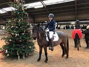 Hest til salg - CIRKELINE