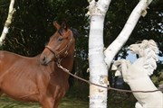 Horse for sale - DAKOTA