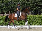 Horse for sale - Dille Belamigo