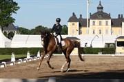 Hest til salg - BRETAGNE (SWB)