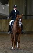 Hest til salg - MISS RUBIN