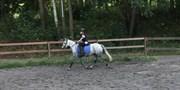 Horse for sale - SINGERHOLMS STAR