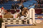 Hest til salg - LADY GAGA
