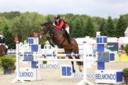 Hest til salg - BELLIS A.K.
