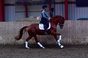 Horse for sale - Venezia