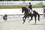 Horse for sale - TRELDEGÅRDS SANDER