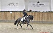 Horse for sale - KASPER