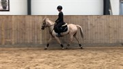 Horse for sale - Mimosa