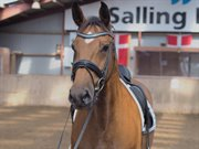 Hest til salg - VITOUCHE