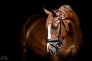 Horse for sale - BARICHELLOS ANTANO