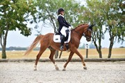 Horse for sale - Calido Birkevang