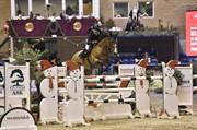 Horse for sale - ELCO DU BUISSON Z