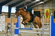 Horse for sale - CORLEDO