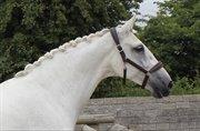 Horse for sale - Corona