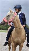 Hest til salg - BAMBINO Z