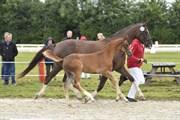Horse for sale - FREDENSDALS CARMINA