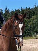 Horse for sale - EDELGÅRDEN'S FEMALE TOUCH