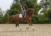 Horse for sale - HALMTOFTE RASPUTIN