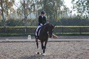 Horse for sale - CASA-ROSA
