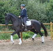 Horse for sale - CIPPELINE Q