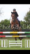 Horse for sale - UP TEMPO VDL