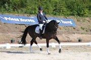 Hest til salg - ANGOLA-AGG