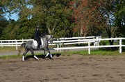 Horse for sale - Hesselbjerge`s Francis