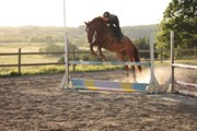 Horse for sale - FAME