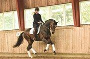 Horse for sale - ZIPPO EG