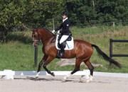 Hest til salg - KIRSEBÆRGÅRDENS BARBIE GIRL