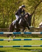 Horse for sale - LODGE PARK RAPADASH