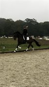 Horse for sale - HERA'S ZORELL